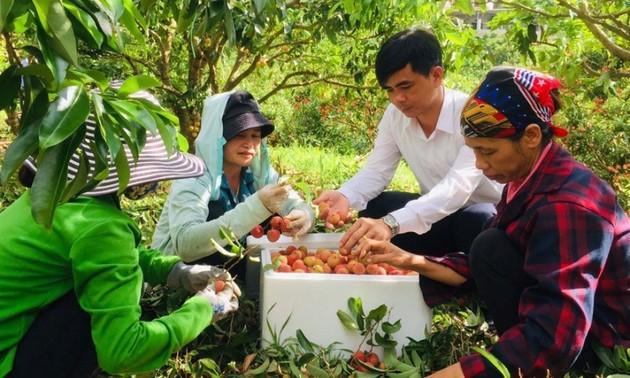 Đẩy mạnh tiêu thụ nông sản tại thị trường nội địa