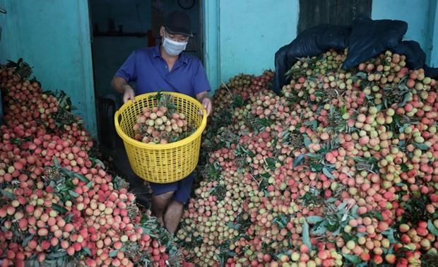 Trong tháng 6 sẽ có các mô hình tiêu thụ nông sản đảm bảo an toàn dịch bệnh