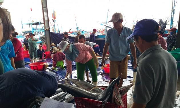 Рыбаки южной части Центрального Вьетнама получили большой улов во время Тэта