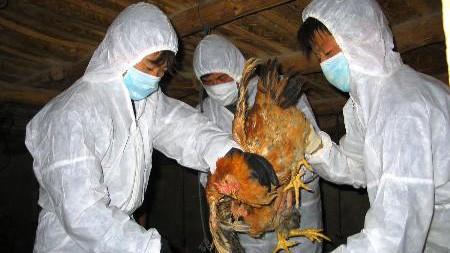 Triển khai biện pháp ngăn chặn dịch cúm gia cầm H7N9