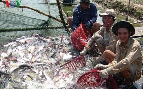Kết luận áp thuế của Hoa Kỳ đối với cá tra fillet đông lạnh của Việt Nam là không có cơ sở