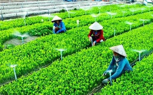 Создание экосистемы устойчивого сельского хозяйства на фоне глобальной пандемии