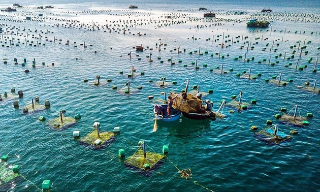 Aquaculture to become large-scale production sector