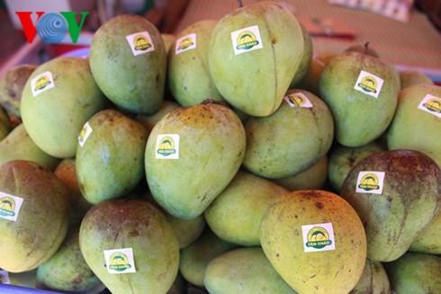 Son La exports more mangoes to UK