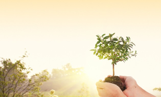 Israel's Tu Bishvat – New Year for the trees