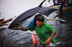 Vietnam proyecta elevar el valor exportable del atún
