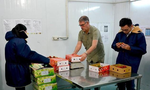 Expertos estadounidenses llegan a Vietnam para poner en cuarentena frutas exportables