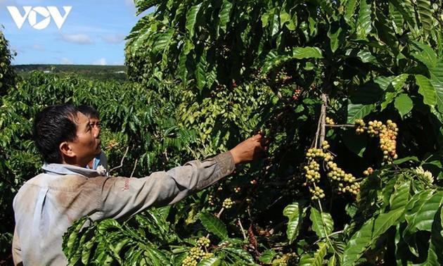 Agricultores de Dak Lak desean mayores apoyos del gobierno en la promoción del consumo de sus productos locales