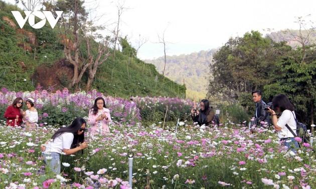 Lam Dong desarrolla el turismo agrícola