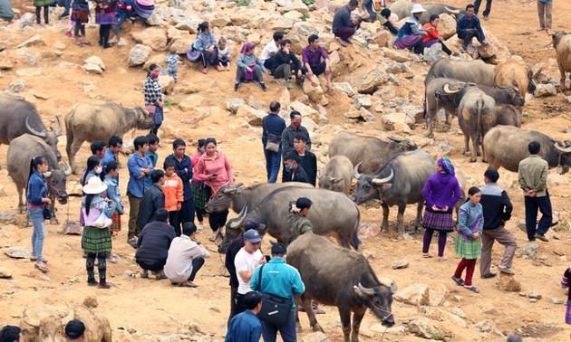 Can Cau, el mercado de búfalos más grande del noroeste de Vietnam