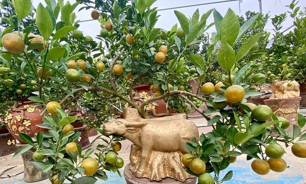 Golden buffalo carrying kumquat tree for lunar year 2021