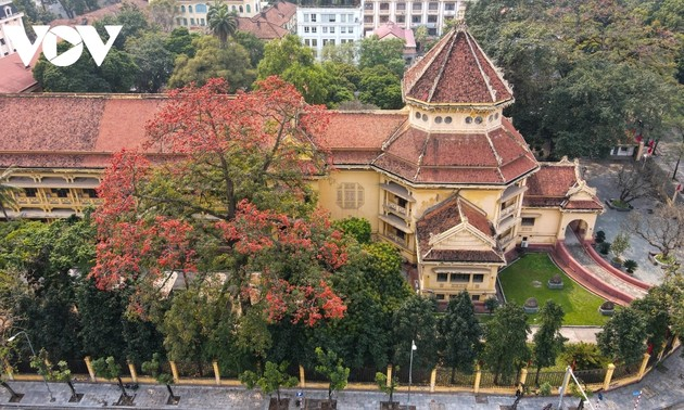 Bombax ceiba blossoms come out throughout Hanoi in March