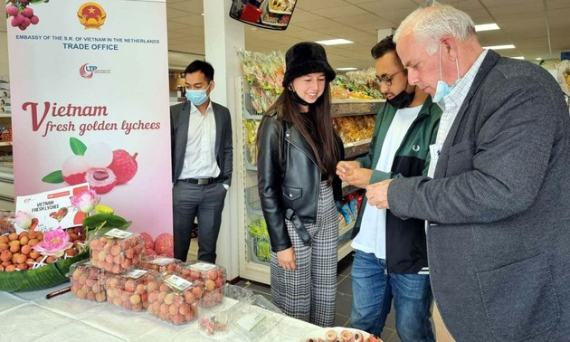 Vietnam's fresh lychees hit the shelves in Netherlands