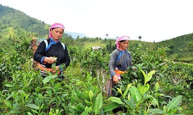 """Das Programm """"Eine Gemeinde, ein Produkt"""" in Lao Cai"""