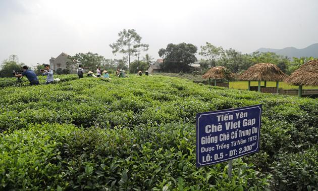 太原省打造新疆茶品牌并与发展旅游相结合