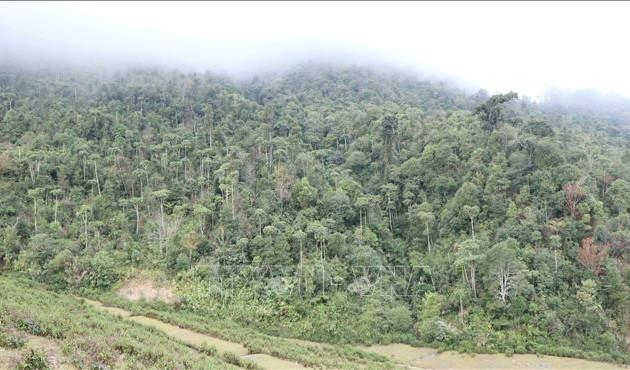 Erhaltung, Entwicklung sowie Erhöhung der Qualität der Naturwälder in Vietnam