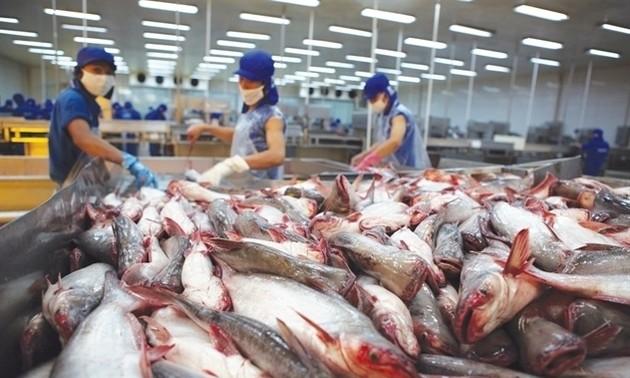 Vietnam proyecta ingresar 2400 millones de dólares por ventas de pescado Tra en 2019