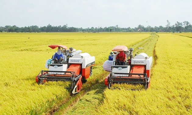 Exportation du riz du delta du Mékong en 2020