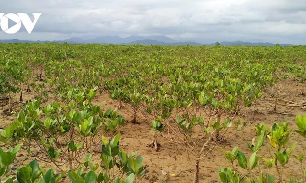 La mangrove de Dông Rui
