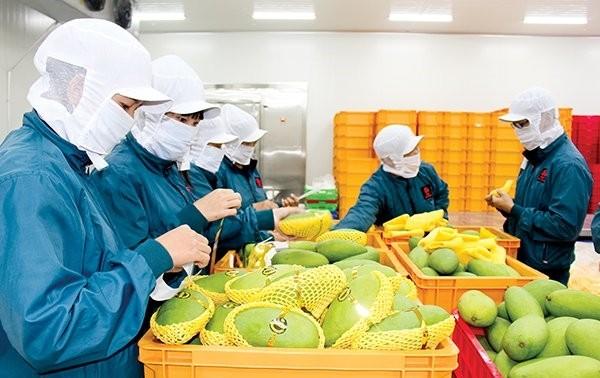 Во Вьетнаме объем экспорта сельскхозяйственной, лесной и рыбной продукции за апрель снизился почти на 17%