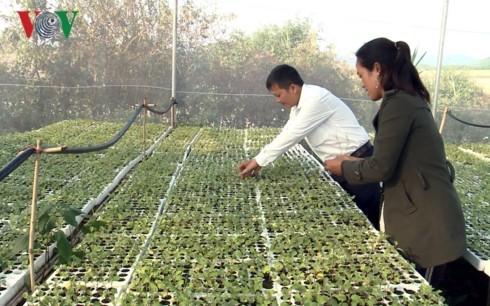 Первое в Зялае селение народности Бана занимается высокотехнологичным сельским хозяйством