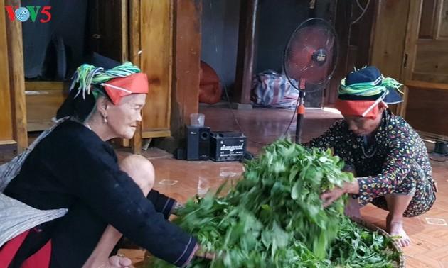 Община Каобо развивает производство вьетнамского чая сорта «Шантует»
