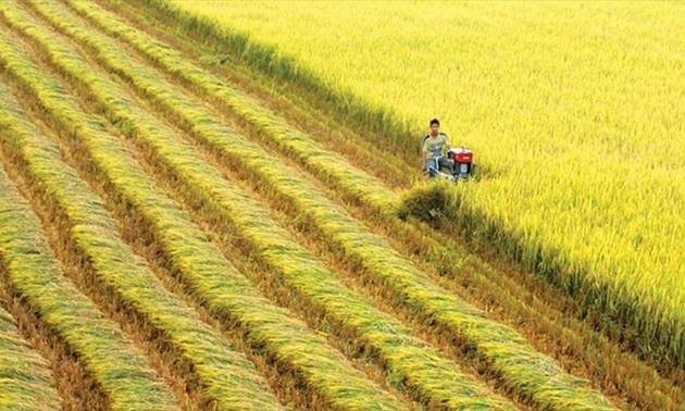 La Suisse aide le Vietnam à appliquer la technologie de télédétection dans la production rizicole