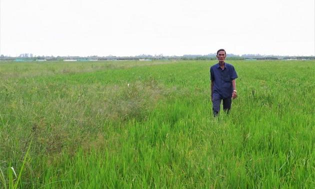 Nông dân tỉnh An Giang chờ mùa nước nổi