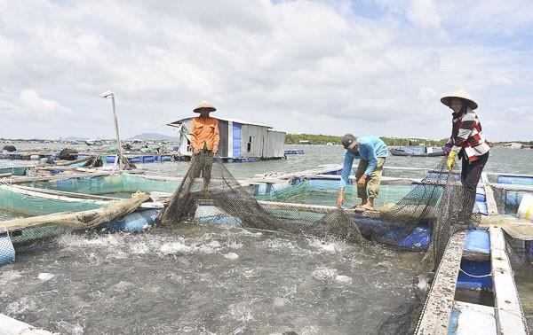 Phát triển mô hình nuôi trồng thủy sản trên biển tại Bà Rịa - Vũng Tàu