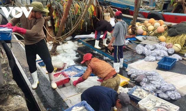 Ngư dân miền Trung liên tục trúng lộc biển