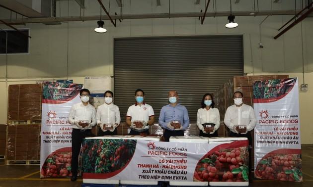 Xuất khẩu lô vải thiều Việt Nam đầu tiên đi Châu âu theo hiệp định EVFTA năm 2021