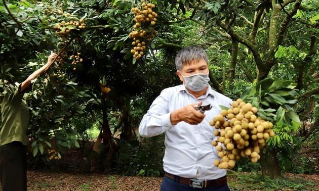 Hội nghị quốc tế về kết nối cung cầu, tiêu thụ nhãn và nông sản tỉnh Hưng Yên