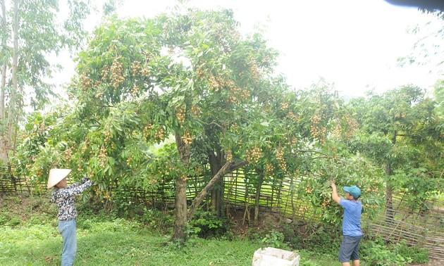 Nông dân Việt Nam đưa nông sản Việt ra thế giới
