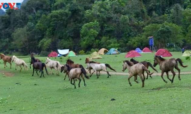 ทุ่งหญ้าด่งเลิม จุดหมายปลายทางที่น่าสนใจสำหรับการไปปิกนิก