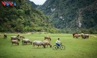 Dataran Tinggi Dong Lam – Tempat Wisata Yang Ideal