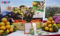 Hanói lidera el país en la construcción de cadenas de valor de productos agrícolas