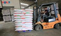 Việt Nam là nước nhập khẩu thóc, gạo lớn nhất của Campuchia