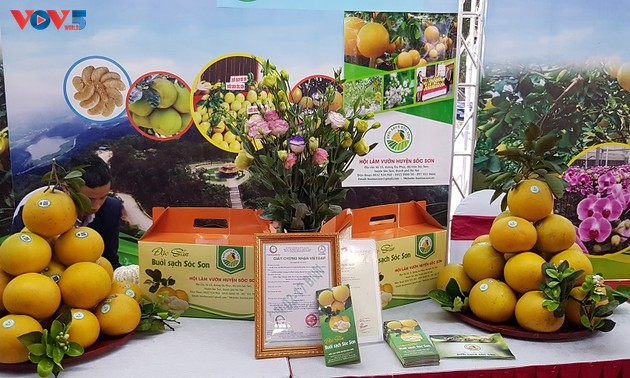 Hanoi takes the lead in building agricultural production chains