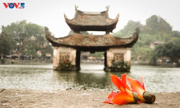 Chùa Thầy: Thương nhớ mùa hoa gạo tháng 3
