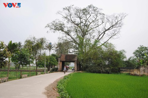 Memperingati 15 Tahun Desa Kuno Duong Lam Mendapat Pengakuan sebagai Situs Peninggalan Sejarah Nasional - ảnh 1