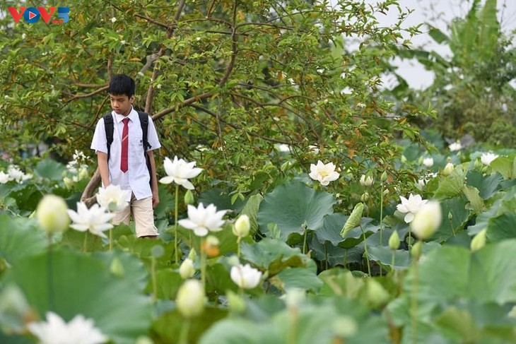 Đầm sen trắng tinh khôi ở Hà Nội  - ảnh 9