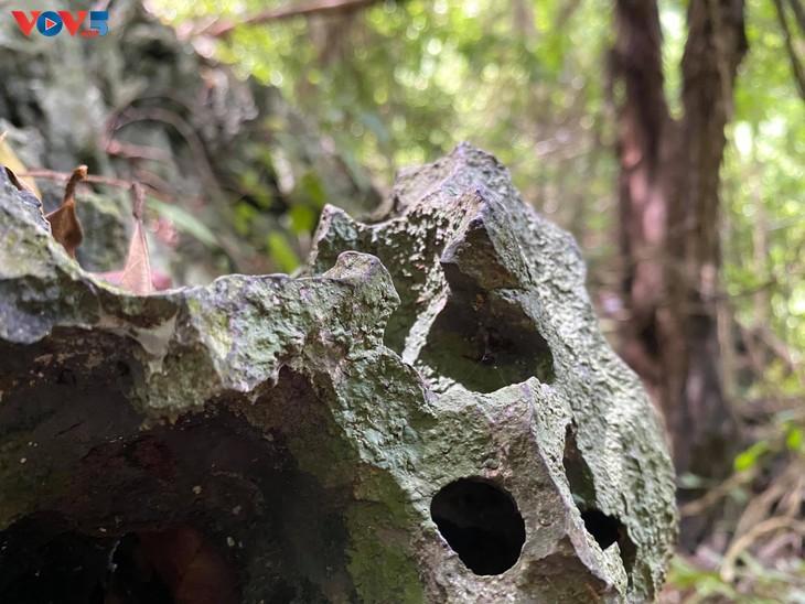 Trải nghiệm leo núi xuyên rừng Cát Bà - ảnh 9