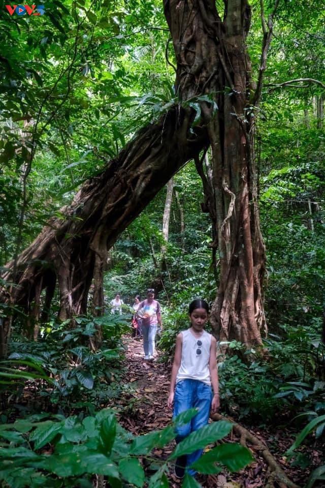 Trải nghiệm leo núi xuyên rừng Cát Bà - ảnh 6