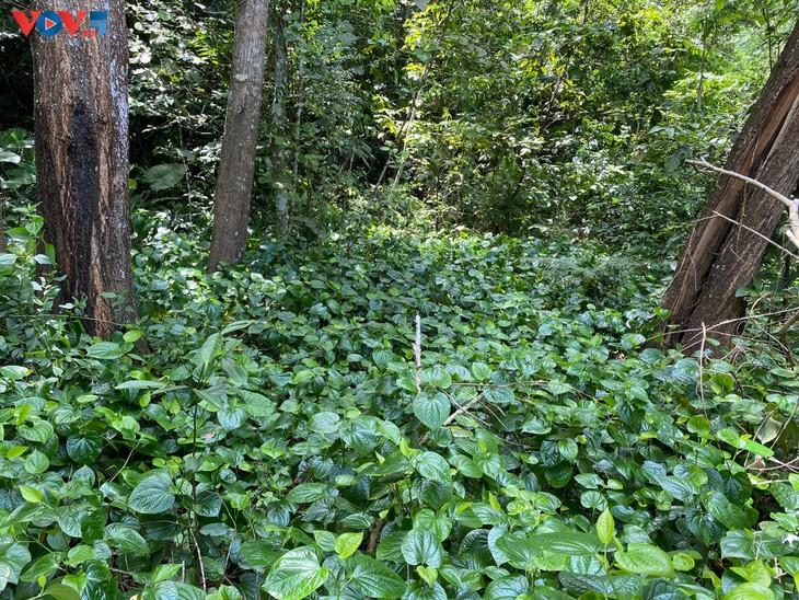 Trải nghiệm leo núi xuyên rừng Cát Bà - ảnh 15