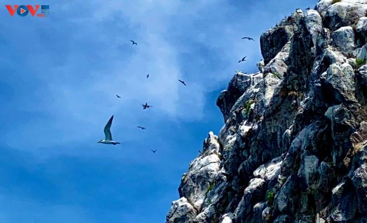Hòn Trứng - sân chim giữa biển tại Việt Nam - ảnh 5