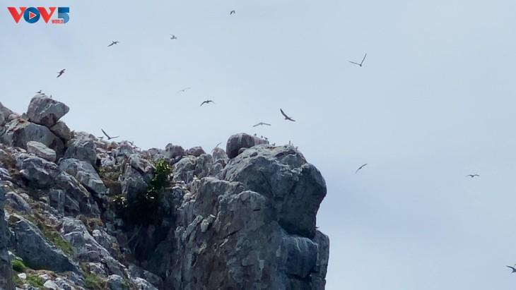 Hòn Trứng - sân chim giữa biển tại Việt Nam - ảnh 3