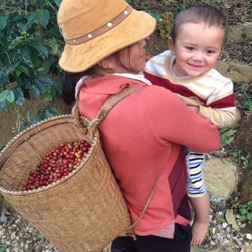 K'Ho Coffee, destino atractivo para los amantes del café en zona altiplánica de Vietnam - ảnh 2