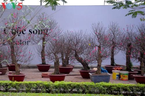 Hanoi à l'approche du Têt - ảnh 4