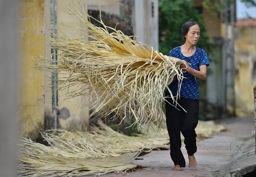 Tri Lễ - a village that makes traditional palm leaf hats - ảnh 5