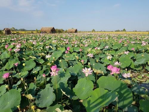 Wertsteigerung der Produkte aus Lotus in Dong Thap - ảnh 1